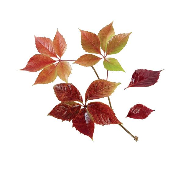 automne2015